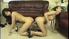 Two slim brunettes enjoy a steaming hot pussy-drilling action